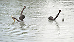 Manyok Garang (left), 11, and Choul Majak, 9, catch fish in Poktap, a town in South Sudan's Jonglei State where conflict, drought and inflation have caused severe food insecurity. The Lutheran World Federation, a member of the ACT Alliance, is helping families tackle food problems, including by providing cash for the purchase of fishing line and hooks. These boys' families fled the region when war broke out in 2013, living elsewhere in the country until returning at the end of 2016.<br /> <br /> Parental consent obtained.