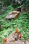 Birds Nest Fern-Strickland State Forest