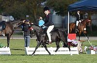 Champion Pony NE 12.2HH