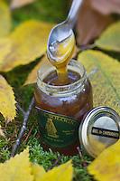 Europe/France/Centre/41/Loir-et-Cher/Sologne/Yvoy-le-Marron: Miel  de Châtaignier - Miel de Sologne de Bernard Gaucher, apiculteur: Ferme: La Fustière  // Europe/France/Centre/41/Loir-et-Cher/Sologne/Yvoy-le-Marron: Chestnut Honey - Honey Sologne Bernard Gaucher beekeeper: Farm: The Fustière