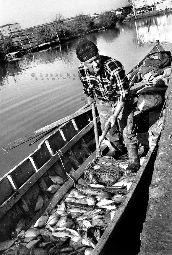- Delta del Danubio, Jurilovca, Un pescatore del villaggio scarica il pescato dalla sua barca al molo di una fabbrica di conservazione del pesce della zona..- Danube Delta Area, Jurilovca. Pavel, a fisherman from the village, discharging his boat at the fish   conservation factory.