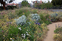 California native plants and  wildflowers in pollinator meadow garden at the Natural History Museum of Los Angeles
