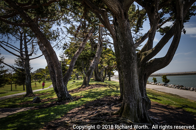 Branches filter sunlight creating shadows along a rise lined with trees, a rise separating the path by the water from a path in the park at San Leandro's Marina Park.