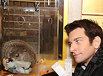 """Staten Island Chuck and Andy Karl visit the """"Groundhog Day'' opening day box office at The August Wilson Theatre on February 2, 2017 in New York City."""