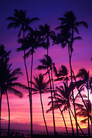 Palm trees are silhouetted against a brilliant multi-hued sunset in Waikiki.