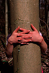 A912K4 Two hands shown against a tree trunk
