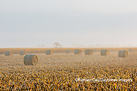 63801-07705 Hay bales in field on foggy morning, Marion Co. IL