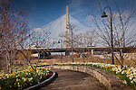 Daffodils frame the Leonard P. Zakim Bunker Hill Bridge in Boston, MA, USA