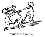 The Sealybull.