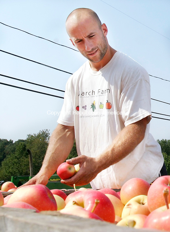 BETHLEHEM, CT. 07 SEPTEMBER 2007-090707SV06--Ben March checks the quality of apples in large bins at March Farms in Bethlehem Thursday. The farm has started picking apples this week.<br /> Steven Valenti Republican-American