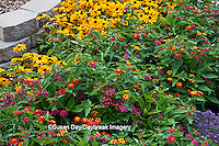 63821-20905 Patriot Cherry Lantana (Lantana camara 'Patriot Cherry')  Butterfly Red Pentas (Penta lanceolata), Tiger Eye Gold Rudbeckia (Rudbeckia hirta 'Tiger Eye Gold'), Alyssum 'Clear Crystal purple Shades',  Butterfly Garden at Cantigny Gardens, Wheaton, IL