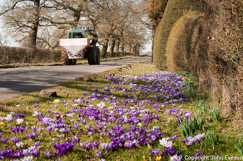 Flowers on a road verge, Cheshire with tractor and fertlizer spreader.