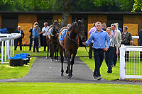 Horses enter the parade ring prior to the first race during Evening Racing at Salisbury Racecourse on 25th May 2019