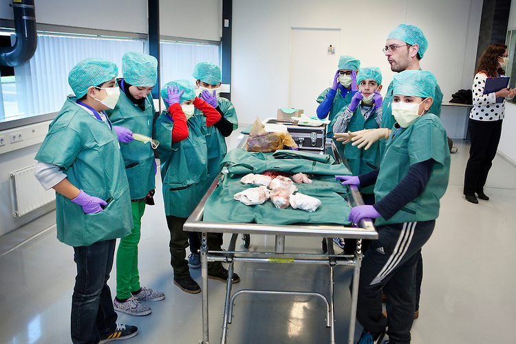 Den Haag, 3 november 2013<br /> De Haagse weekendschool brengt een bezoek aan de patholoog anatoom van het Nederlands Forensisch Instituut.<br /> De organen zijn voor de gelegenheid van dieren, uiteraard<br /> Foto Felix Kalkman