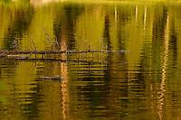 Temagami,  New Liskard,  Martin River areas of Northern Ontario.