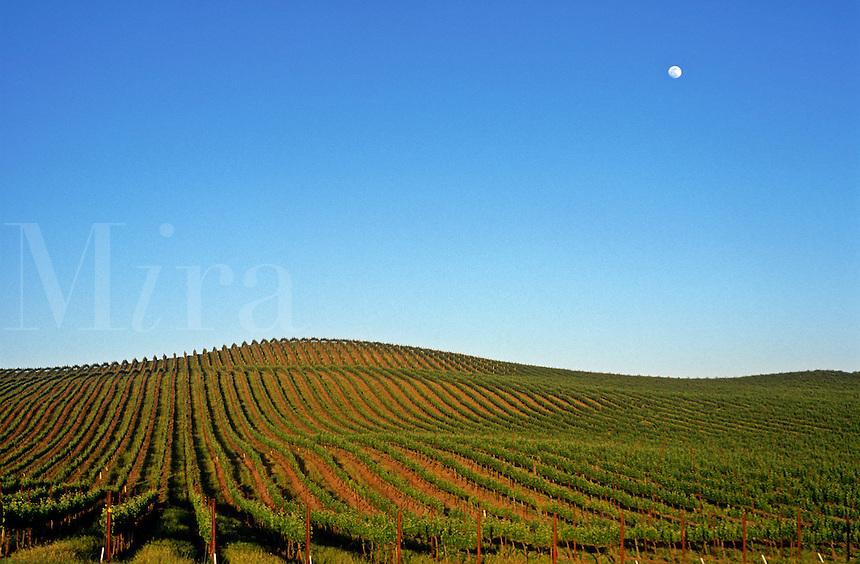 USA, California, Napa Valley, Carneros, Grape vineyard with full moon rising