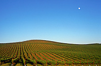 USA, California, Napa Valley, Carneros, Grape vineyard with full moon rising