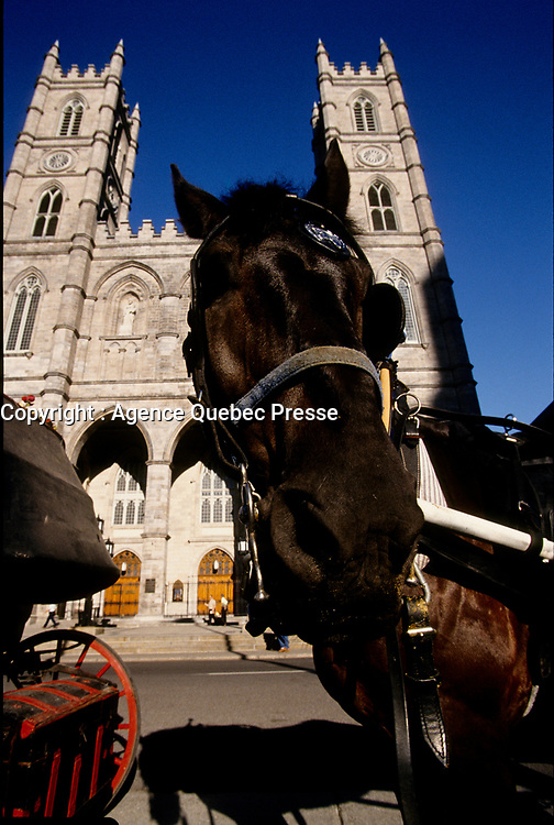 Montreal (Qc) CANADA - 1999  File photo - Horse in front of Notre-Dame Basilica