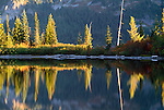 Reflections of alpine firs in lake, Mt. Rainier National Park, Cascade Range, Washington, USA