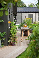 Decking from the terrace leads down and around the wood clad house to raised beds and a potting table
