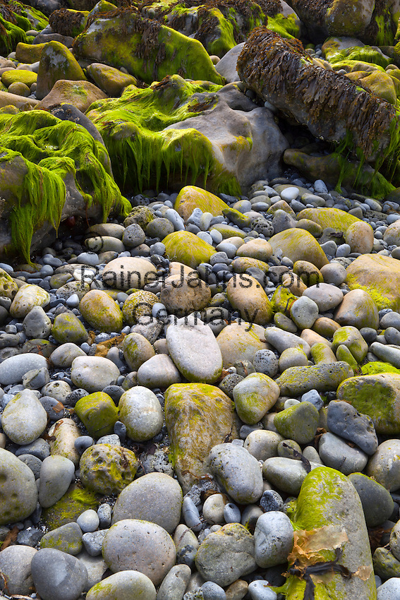 Ireland, County Galway, Doorus Peninsula near Kinvarra: Pebbles, rocks and seaweed on Traught beach | Irland, County Galway, Doorus Halbinsel bei Kinvarra: Kieselsteine, Geroell und Seetang am Traught beach