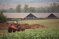 Inhauma_MG, Brasil...Gestao no campo na Fazenda Sao Joao em Inhauma, Minas Gerais. Na foto plantacao de milho...Field management in the Sao Joao Farm in Inhauma, Minas Gerais. In this photo a cornfield. ..Foto: JOAO MARCOS ROSA / NITRO