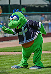 8 July 2014: Vermont Lake Monsters Mascot Champ entertains the fans during a game against the Lowell Spinners at Centennial Field in Burlington, Vermont. The Lake Monsters rallied with two runs in the 9th to defeat the Spinners 5-4 in NY Penn League action. Mandatory Credit: Ed Wolfstein Photo *** RAW Image File Available ****