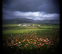 Flowers bloom along a grassy field as sheep graze along the DIngle Peninsula in Ireland. (Photo by Pat Shannahan)
