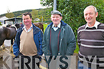 Watching over the proceedings at the Cahersiveen horse & pony fair on Saturday were l-r; Michael O'Neill, Michael Clifford & Michael O'Shea.