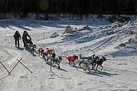 Martin Buser's team arrives at Nikolai. Photo by Jon Little.
