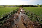 River Kennet flowing across fields towards Swallowhead Springs, West Kennet, Wiltshire, England, UK