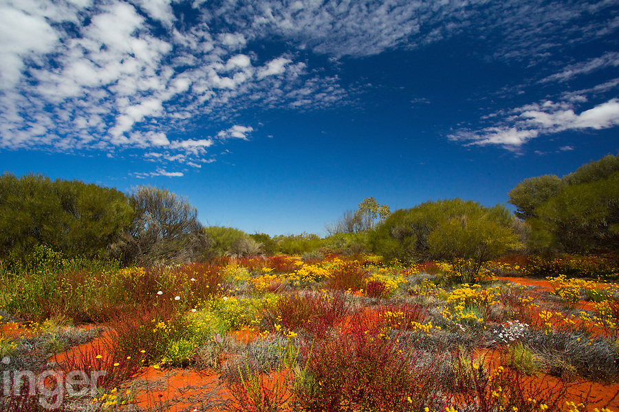 Western Australia Wildflower Season