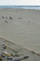 Seeregenpfeifer, Ei, Eier, Gelege im Nest, See-Regenpfeifer, Regenpfeifer, Charadrius alexandrinus, Kentish plover