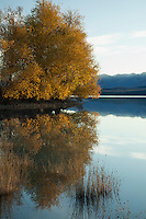 Autumn willow reflections in Lake Pukaki, Mackenzie Basin, South Island New Zealand.