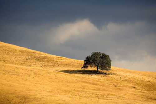 THE SUN BRIGHTENS UP A HILL WHILE OMINOUS CLOUDS LOOM IN THE TEHACHAPI MOUNTAINS, CALIFORNIA