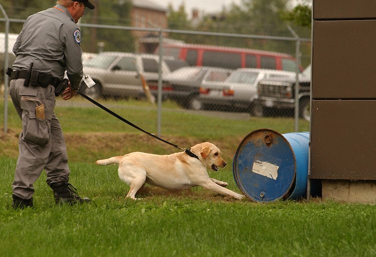 Tech. Michael Mulcahy and 'Kelly' look for a live body during a demostration of search and rescue skills at the opening ceremony of the new U.S. Capitol Police K-9 facility which is located at the U.S. Botanical Gardens Nursery facility in SW.