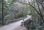 Man on bridge at Forest of Nisene Marks State park