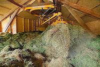 La luzerne peut remplacer le mais, elle a l'avantage de pomper les nitrates des sols qui sont a l'origine des marees vertes.