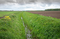 Field drain in spring - Lincolnshire, April
