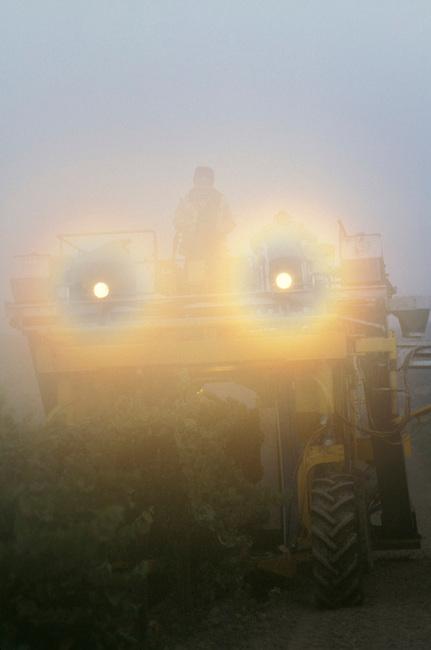 Mechanical harvester picks grapes in foggy morning near Napa, CA