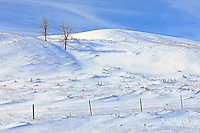 Fence, trees and snow<br /> Willow Bunch<br /> Saskatchewan<br /> Canada