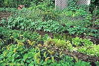 HS18-111b  Vegetable garden - lettuce, beans, carrots