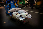 Tokyo, 1st of March 2010 - Tuna at Tsukiji wholesale fish market, biggest fish market in the world. 6:05 a.m, frozen tunas taken away from the auction area by a buyer.