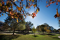 Campus fall leaves.<br />