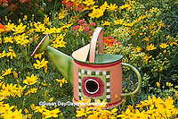 63821-205.08 Watering can birdhouse in garden with Threadleaf Coreopsis (Coreopsis verticillata 'Golden Showers' Common Rue (Ruta graveolens) and Butterfly Milkweed (Asclepias tuberosa)  Marion Co. IL