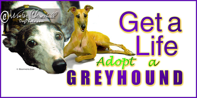 Greyhound This design is offered on gift merchandise ONLY.<br />