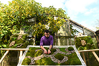 BNPS.co.uk (01202 558833)<br /> Pic: ZacharyCulpin/BNPS<br /> <br /> Living art artist Noah McKeown starts work on his next Moss-terpiece.<br /> <br /> The award winning Dorset based artist has started creating living landscapes using preserved moss and succulent's beautifully framed in discarded picture frames.<br /> <br /> Despite their verdent appearance the finished works require no watering, and will happily sit on a wall for years.