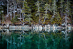 Evergreen Trees growing along the shore of Prince William Sound reflect in the calm waters, Prince William Sound, Whittier, Southcentral Alaska, USA, Summer