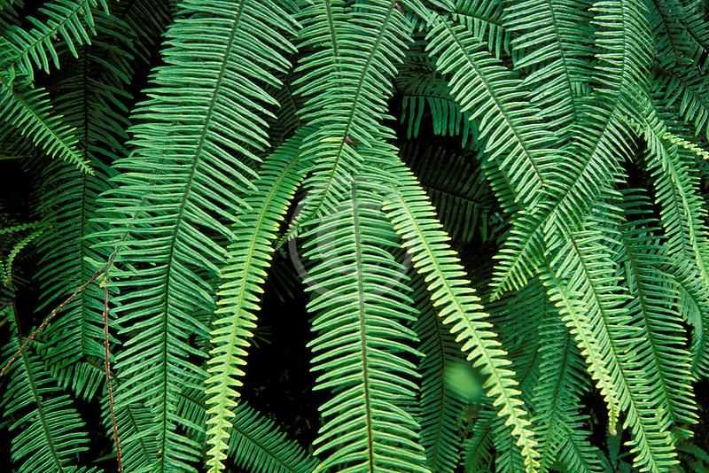 Tropical plants, Green fern