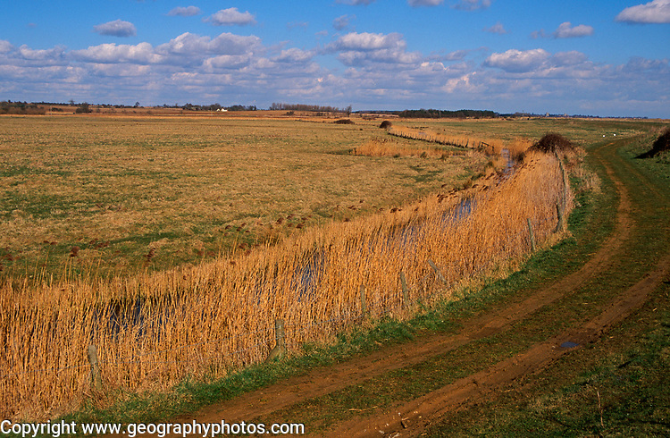 A87BY2 Reeds, marshes and drainage ditches Hollesley Suffolk England